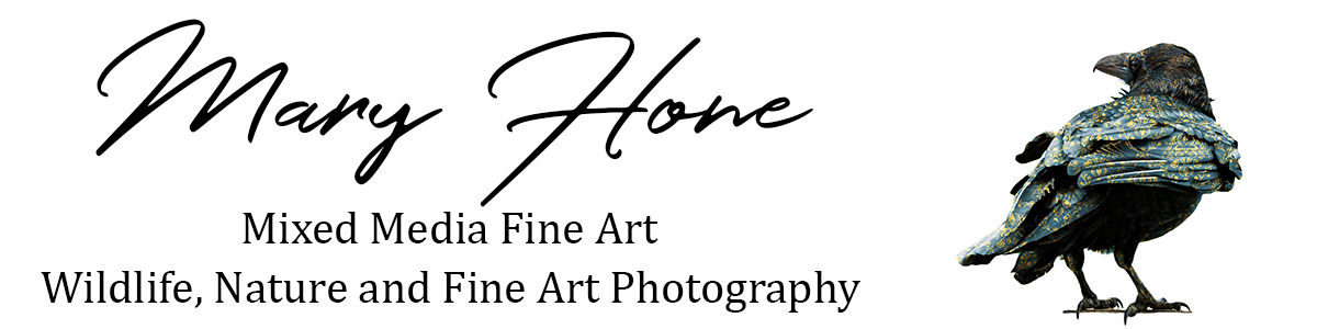 Mary Hone Photography